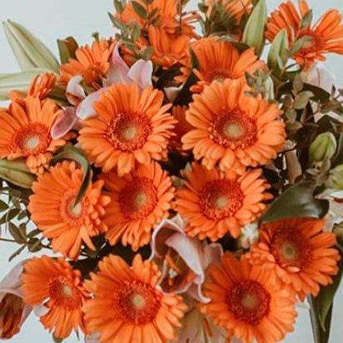Piur Cosiness - Gerberas naranjas 2