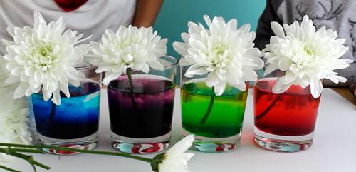 como teñir flores naturales