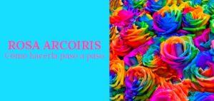 comprar rosa arcoiris