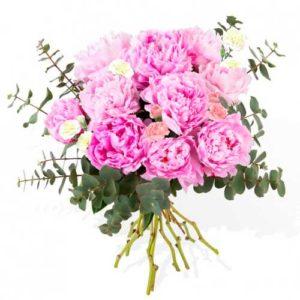 peonias rosas