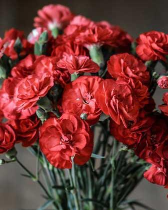 flores para pedir perdón a un hombre