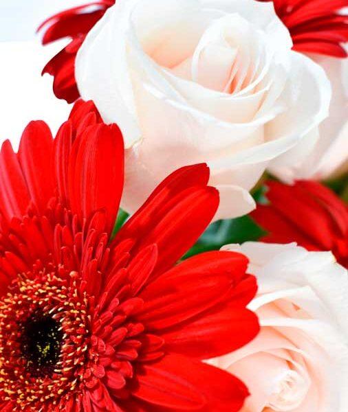 flores elegantes