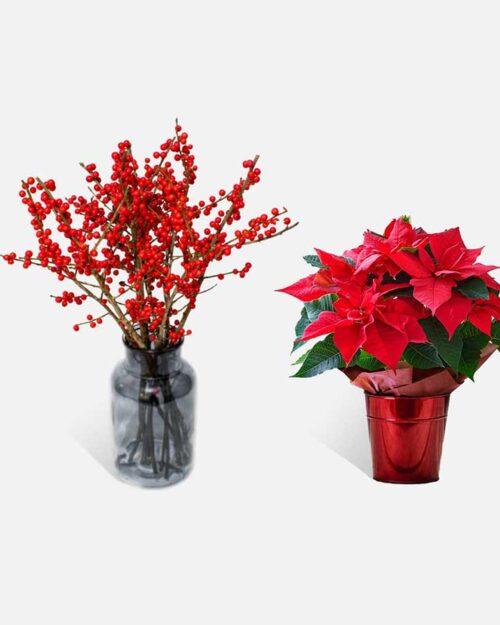 Flores y plantas de Navidad 1