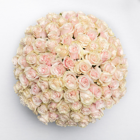 Piur Refined - 100 rosas vintage 3