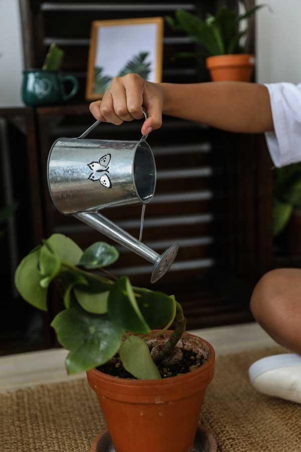 regar correctamente nuestras plantas
