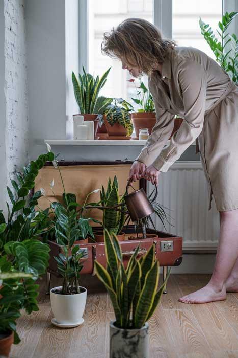 7 + 1 Consejos útiles para regar tus plantas 1