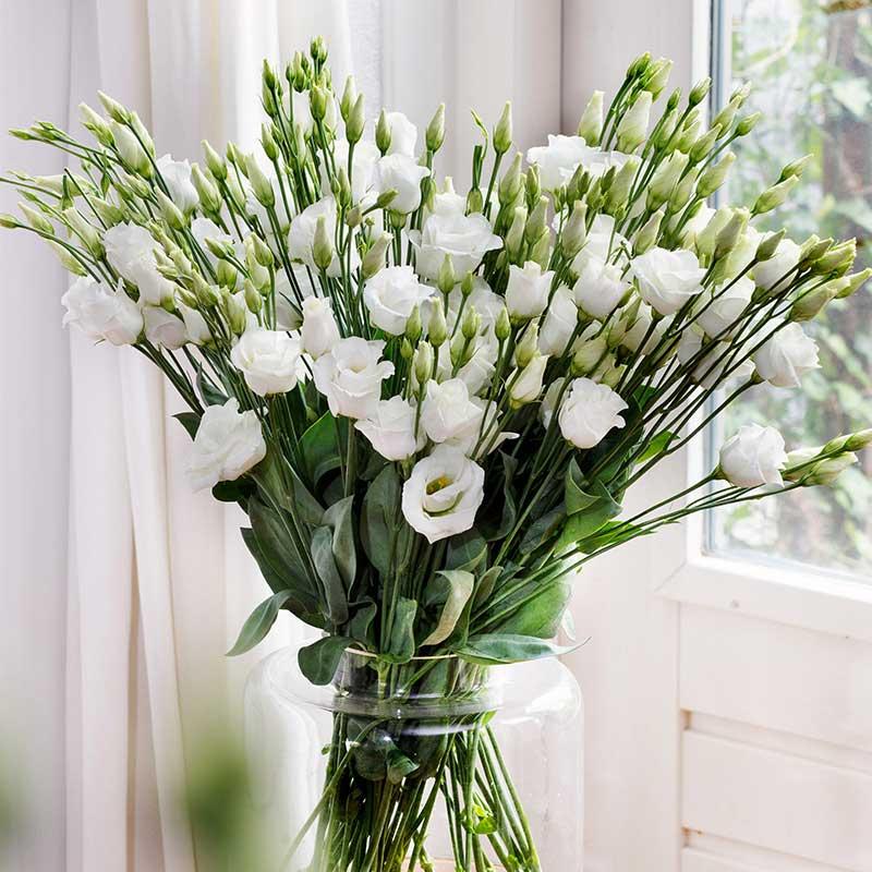 lisianthus blancos